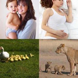 4 fotos 1 palavra 3 letras solução MÃE