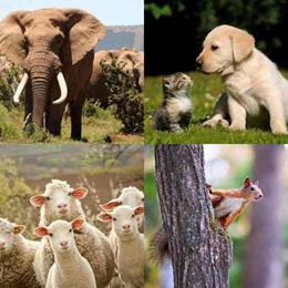 4 fotos 1 palavra 6 letras solução ANIMAL