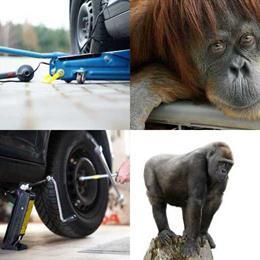 4 fotos 1 palavra 6 letras solução MACACO