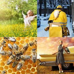 4 fotos 1 palavra 7 letras solução AMARELO