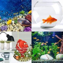 4 fotos 1 palavra 7 letras solução AQUÁRIO